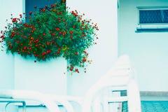Macizo de flores en la pared bilding Fotografía de archivo libre de regalías