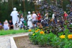 Macizo de flores en parque Foto de archivo