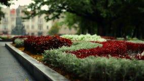 Macizo de flores floral encantador al aire libre almacen de video