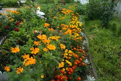 Macizo de flores floreciente cerca de la casa en agosto Fotos de archivo