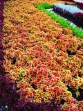 Macizo de flores hermoso Imágenes de archivo libres de regalías