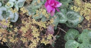 Macizo de flores de flores almacen de metraje de vídeo