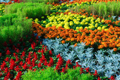Macizo de flores urbano fotografía de archivo