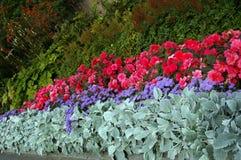 Macizo de flores variado Imagen de archivo