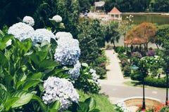 Macizos de flores coloridos florecientes en parque del verano imagenes de archivo
