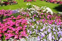 Macizos de flores de Abbey Gardens, Evesham Fotos de archivo libres de regalías