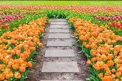 Macizos de flores de los tulipanes de la primavera Imagen de archivo libre de regalías