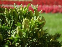 Macizos de flores del fragmento Foto de archivo libre de regalías