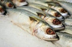 Mackarel-Fische Lizenzfreies Stockfoto