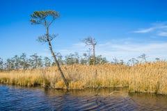 Mackay wyspy Krajowy rezerwat dzikiej przyrody na Knott ` s wyspie Zdjęcie Stock