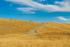 Mackenzie country, South Island, New Zealand Stock Images
