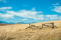 Mackenzie kraj, Południowa wyspa, Nowa Zelandia Fotografia Royalty Free