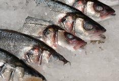 Mackeral on ice at fishmonger Royalty Free Stock Photography