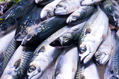 Mackerel Stock Photography