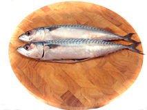 mackerel Arkivbild