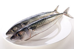 Mackerel. Fresh raw mackerel on white plate close up Stock Photo
