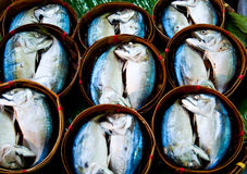 Mackerel Royalty Free Stock Images