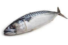 Mackerel Stock Images