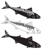 Mackerel. The figure shows a fish mackerel Royalty Free Stock Photography
