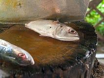 mackerel Arkivfoto