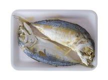 mackerel Arkivfoton