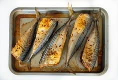 Backed Mackerel on the baking tray, isolated royalty free stock photo