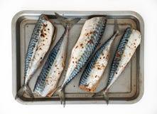 Mackerel on the baking tray, isolated royalty free stock photography
