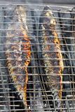 Mackerel On The Barbecue Royalty Free Stock Images