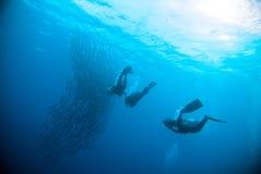 Mackerel barracuda kingfish diver blue scuba diving bunaken indonesia ocean Stock Photos