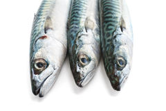 Mackerel closeup Royalty Free Stock Photo