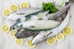 Mackerel And Codfish. Raw fresh mackerel and codfish with ice, lemon slices and parsley, flat lay Stock Image