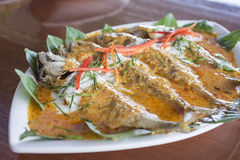 Mackerel with Curry made from coconut milk, chili. Stock Photography
