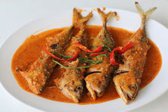Mackerel in dried red curry. On white dish. It is spicy Stock Photography