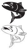 Mackerel. The figure shows a fish mackerel Stock Image