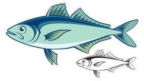 Mackerel. The figure shows a fish mackerel Royalty Free Stock Photos