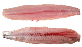 Mackerel fillets isolated Royalty Free Stock Image