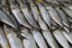 Mackerel Fish. Close-up of an array of fresh mackerel fish or ikan kembung on ice in the market royalty free stock photos