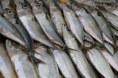 Free Mackerel Fish Royalty Free Stock Photos - 18055688