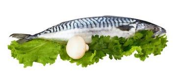 Mackerel fish Stock Image