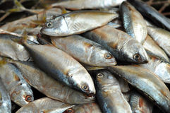 Mackerel fish. Used as food in Thailand is sold fresh  and steamed Royalty Free Stock Image