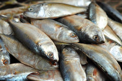Mackerel fish. Used as food in Thailand is sold fresh  and steamed Stock Photo