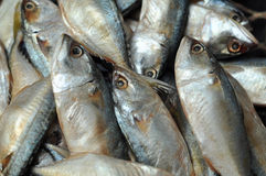 Mackerel fish. Used as food in Thailand is sold fresh  and steamed Stock Photos