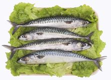 Mackerel ( fish ) Royalty Free Stock Images