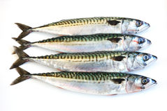 Mackerel fish Royalty Free Stock Photo