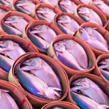 Mackerel fish in bamboo basket Stock Images