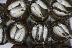 Mackerel fish in bamboo basket Stock Image
