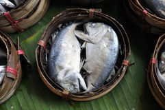 Mackerel Fish Bamboo Basket Thailand Stock Photo