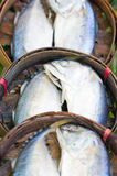 Mackerel Fish. Mackerel Fish In Basket Royalty Free Stock Image