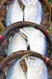 Mackerel Fish. Royalty Free Stock Image