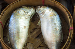 Mackerel fish in basket. At the market Royalty Free Stock Image